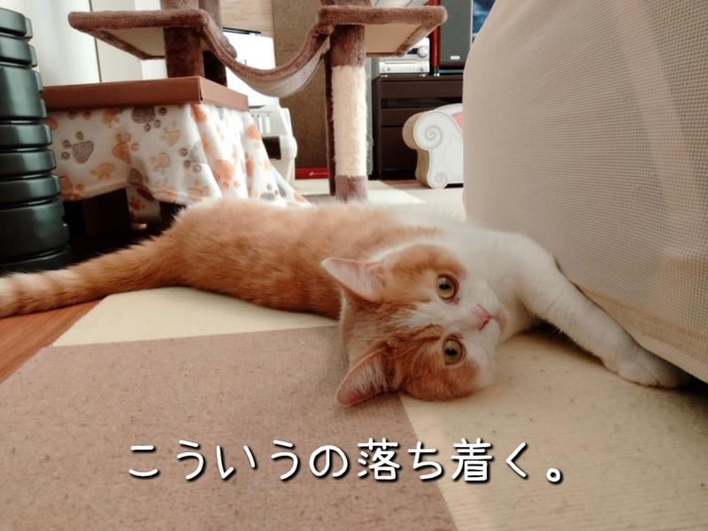 f:id:ameda-amanatsu:20210914085412p:plain