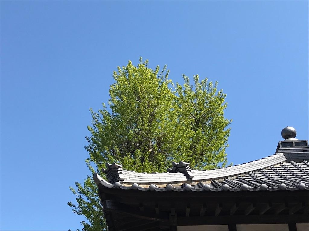 f:id:amefuri5kumanoko:20200419034745j:image