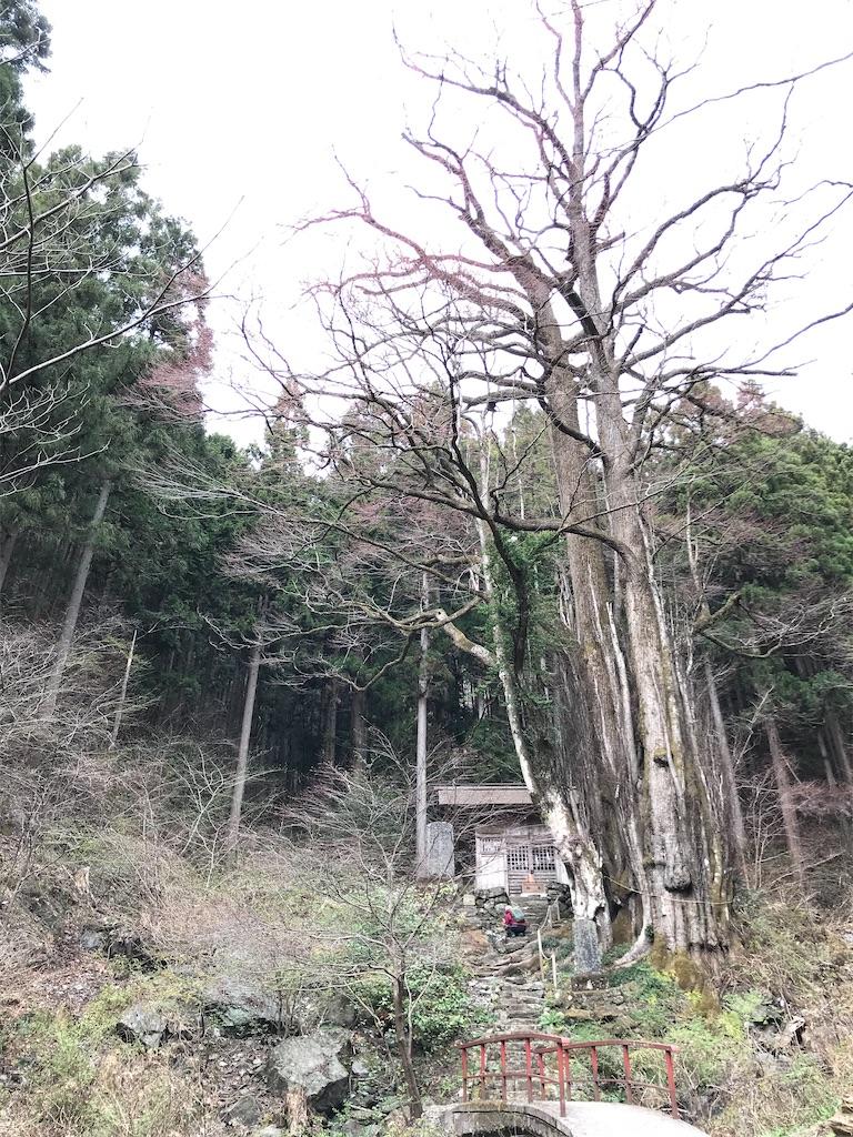 f:id:amefuri5kumanoko:20210407083504j:image