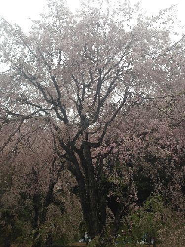 f:id:amenohitsuki:20160831081843j:plain