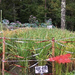f:id:amenohitsuki:20160922180234j:plain