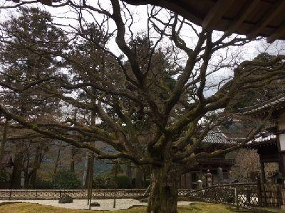 f:id:amenohitsuki:20170405222220j:plain