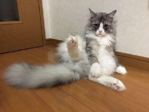 f:id:amenohitsuki:20180716012058j:plain