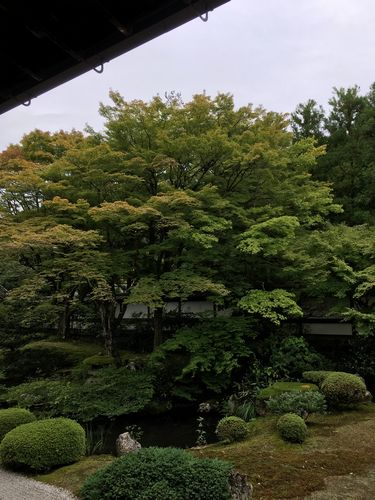 f:id:amenohitsuki:20190612235535j:plain