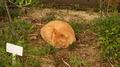 江の島の猫03