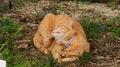 江の島の猫04