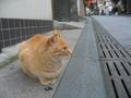 江の島の猫05