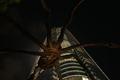 六本木ヒルズと蜘蛛