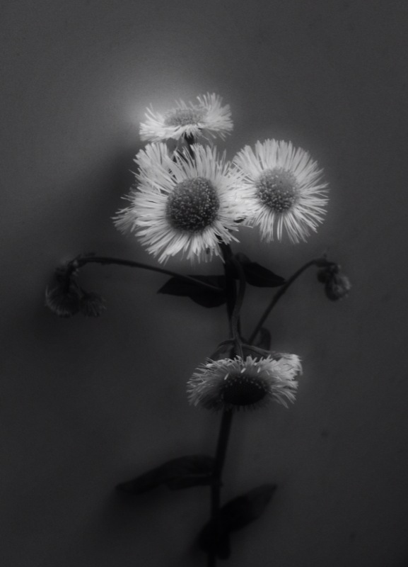 白黒写真館