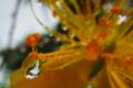 [花]sizuku-tree