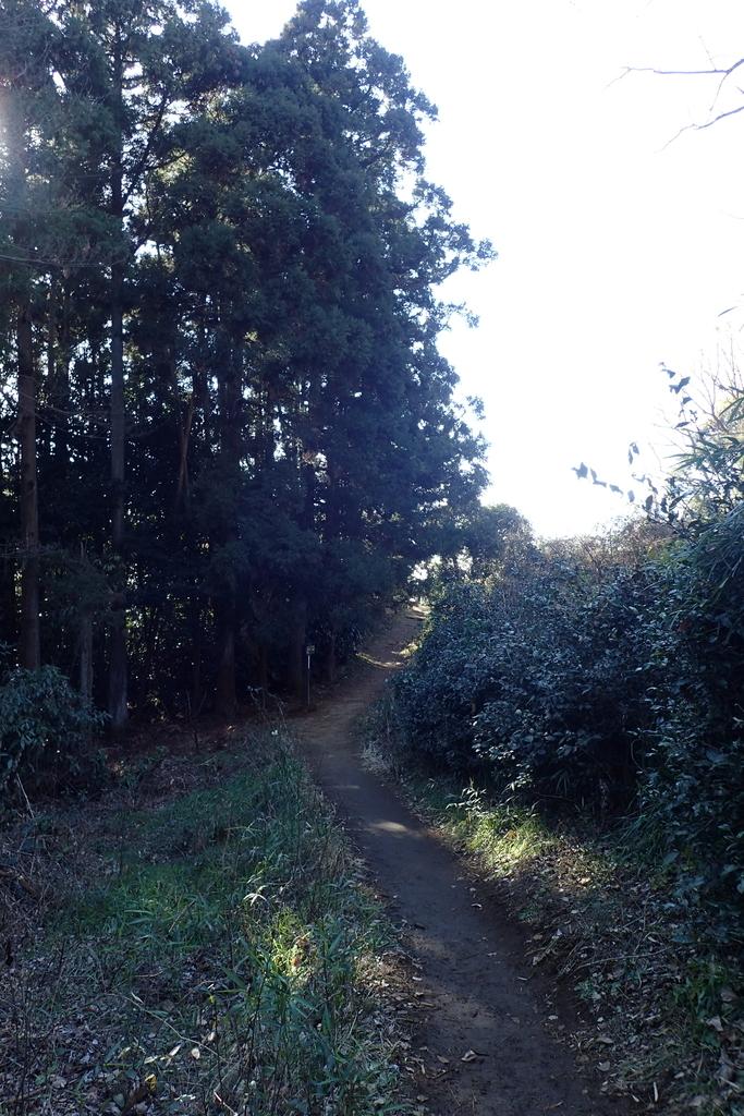 f:id:ametsuchi-gohan:20190111181906j:plain
