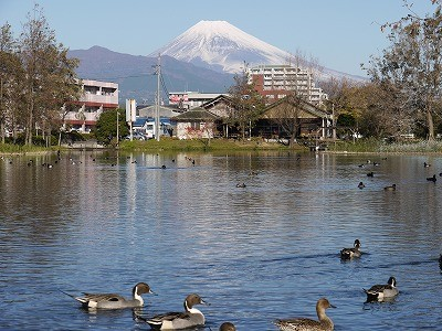 f:id:amihsim:20111211152738j:image