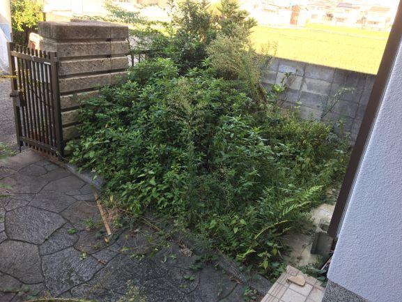 築古戸建 庭の木