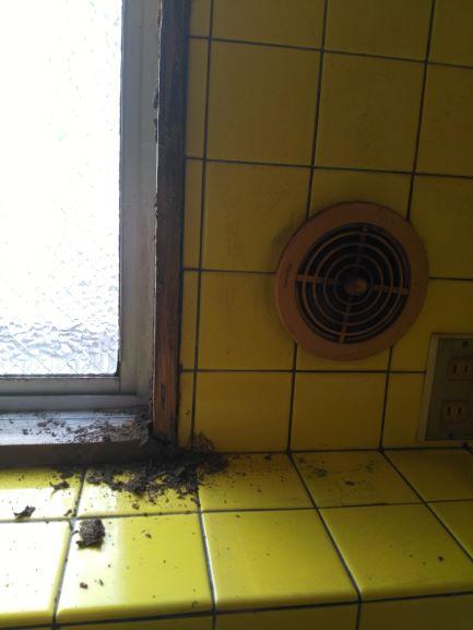 シロアリに食われた窓枠
