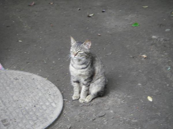 城ヶ崎海岸の灯台の近くにいた猫さん