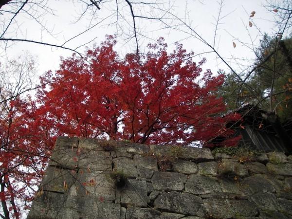 会津若松の鶴ヶ城は紅葉まっさかり