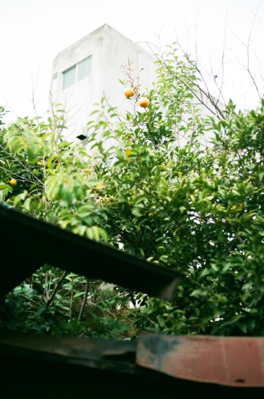 f:id:amuroikimasu:20170402120434j:plain