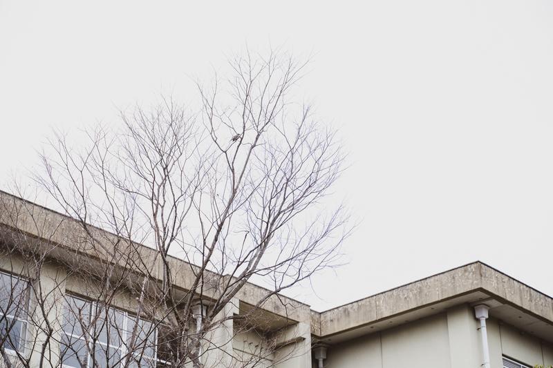 f:id:amuroikimasu:20200219182155j:plain