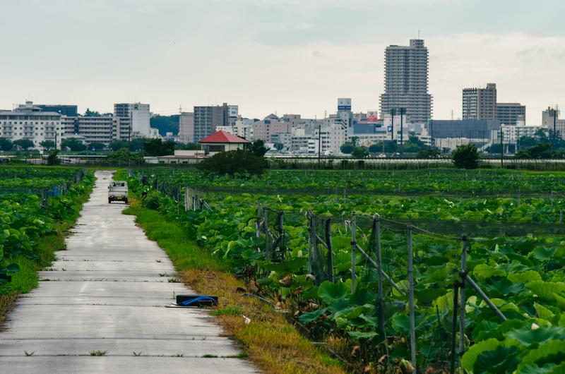 f:id:amuroikimasu:20200726184649j:plain