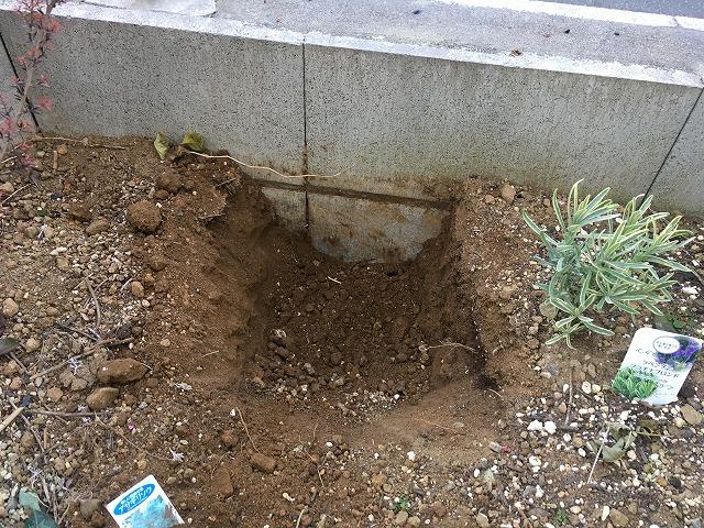 植え穴を掘った状態