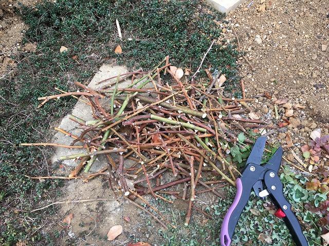 剪定した枝