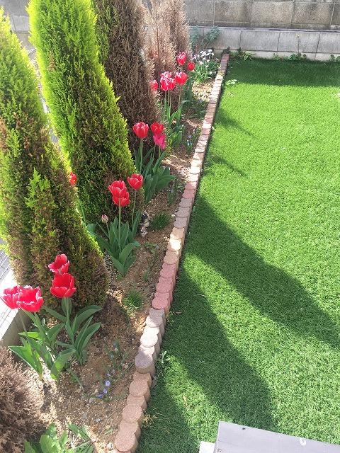 チューリップが並ぶ花壇の様子 4月4日