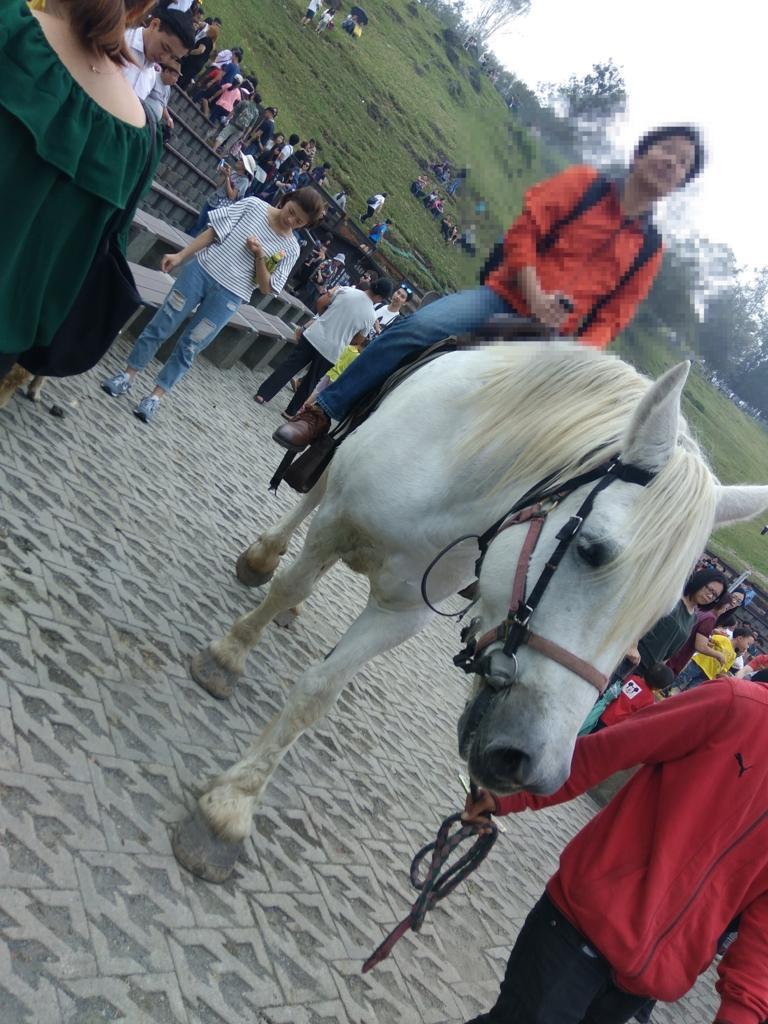 清境農場の馬