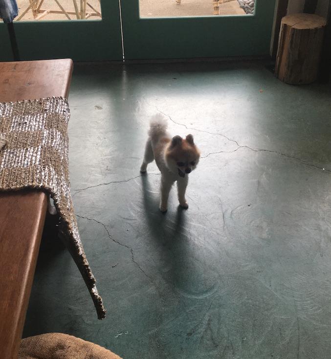 ハワイ-カイルア-オススメショップ-犬