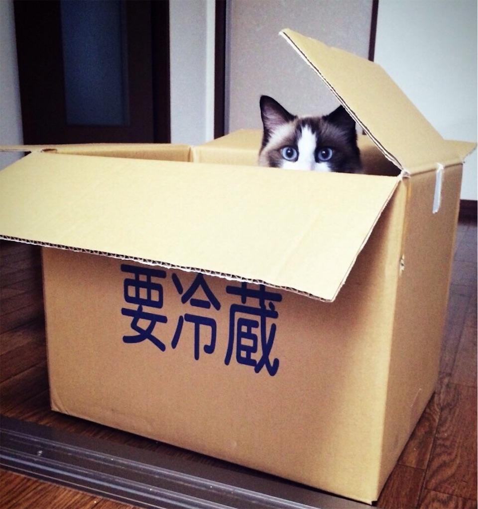 f:id:ana_yuki:20170207060324j:image