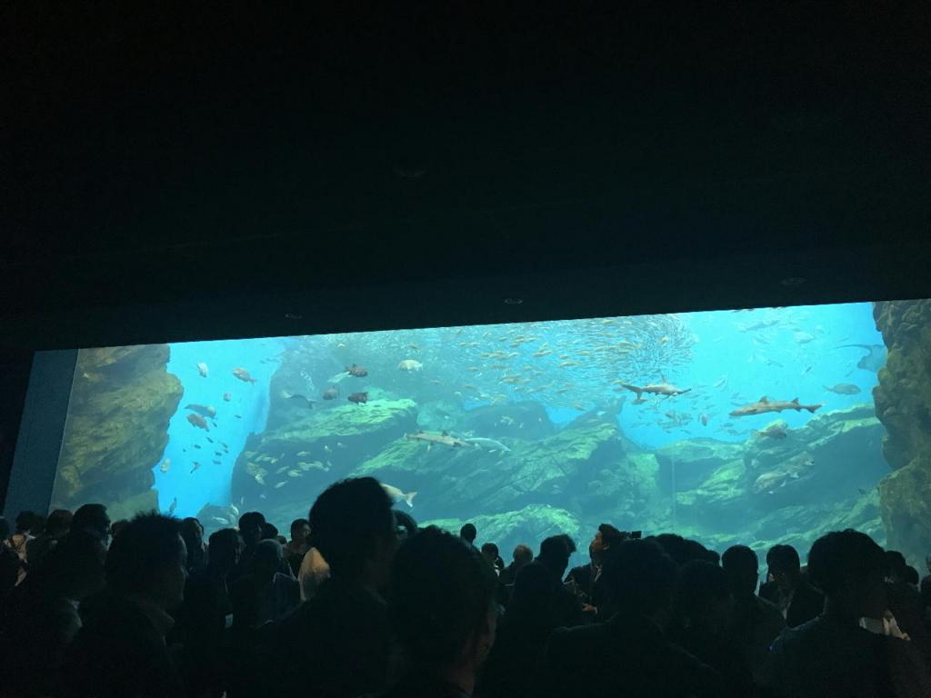 仙台うみの杜水族館の巨大水槽「いのちきらめく うみ」