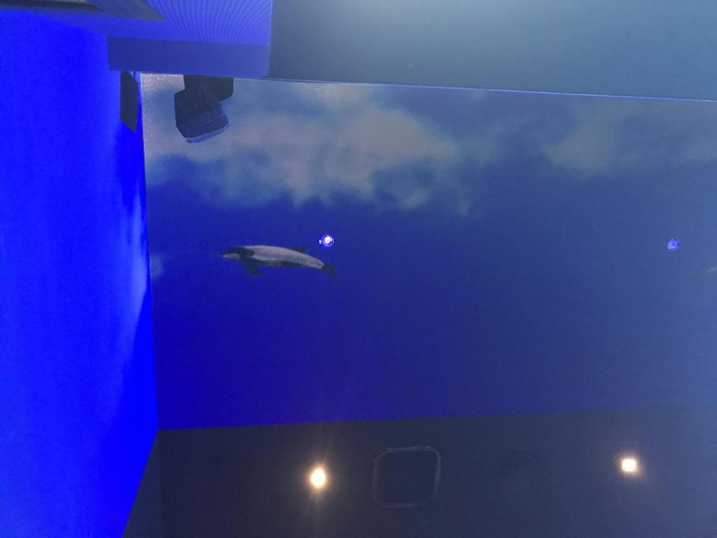 仙台うみの杜水族館の360°大パノラマプロジェクションマッピング(水槽側天井部分)