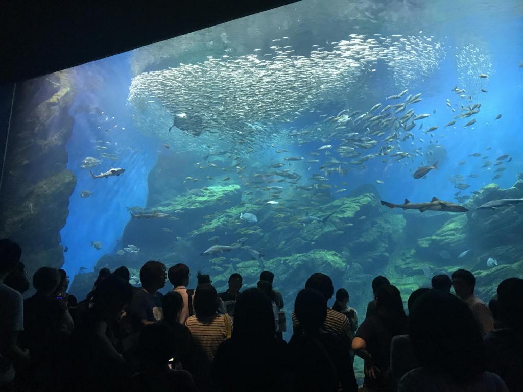 仙台うみの杜水族館の巨大水槽(マイワシの躍動感溢れる群れの泳ぎ)