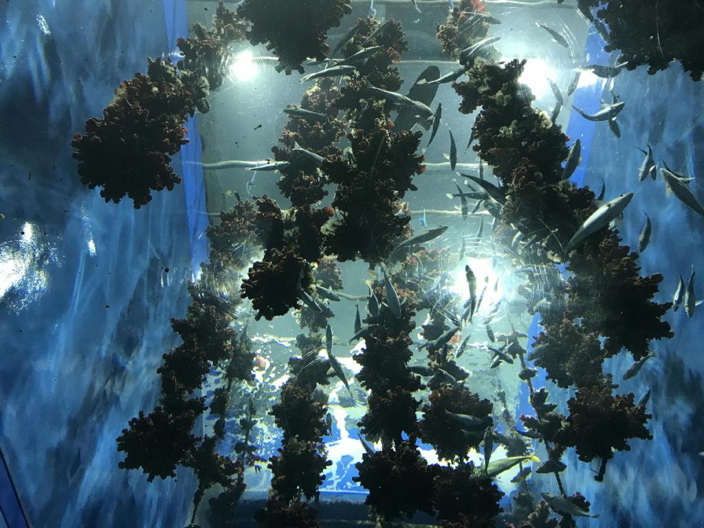 仙台うみの杜水族館に展示されるマボヤのもり
