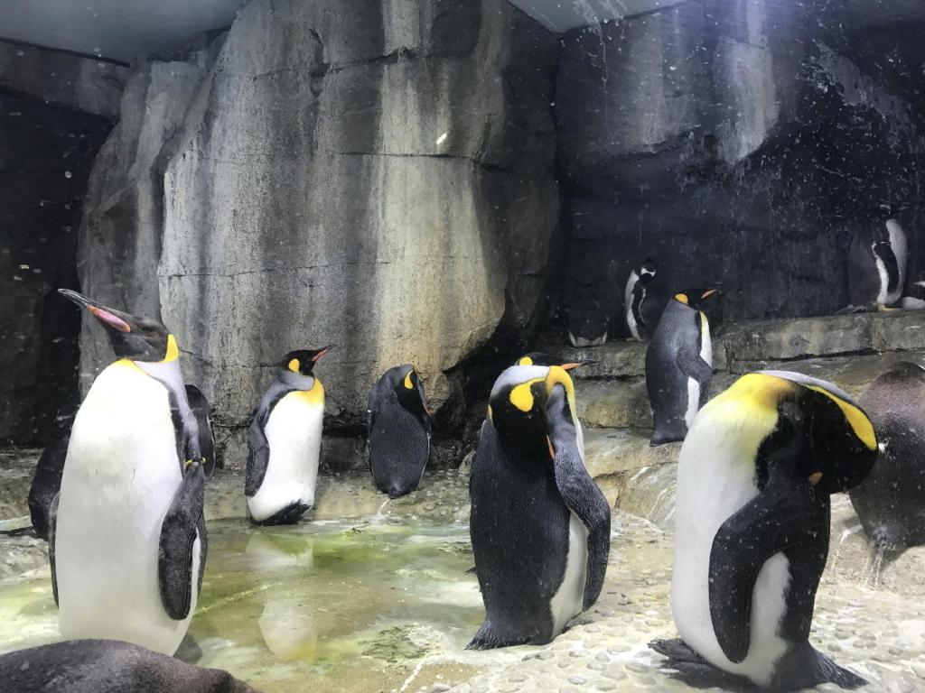 仙台うみの杜水族館で飼育されるペンギン