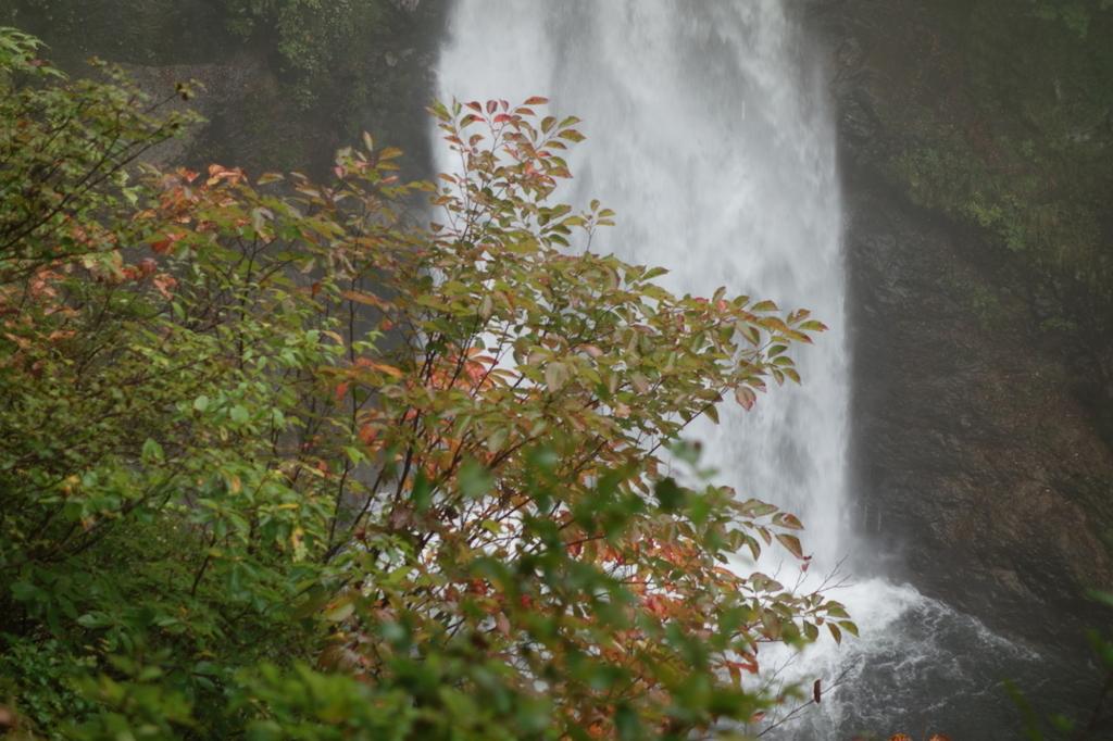 滝見台から見る秋保大滝(下部)