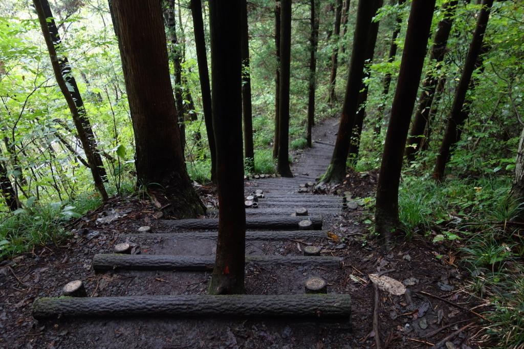 秋保大滝滝壺への道(林道の階段)