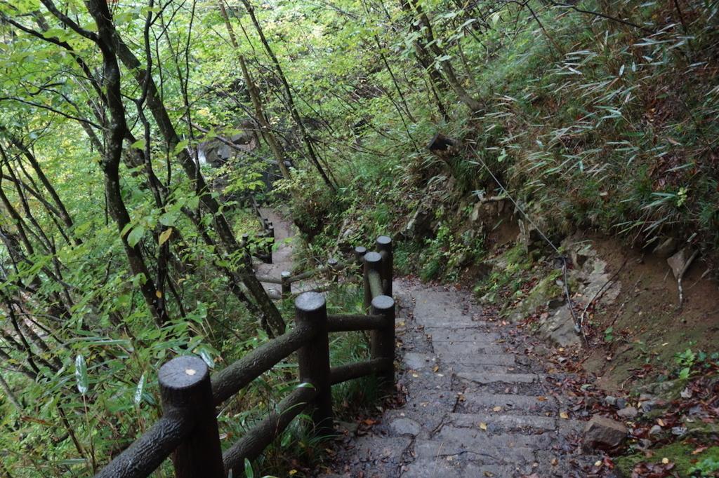 秋保大滝滝壺への道(不動滝橋からの林道にある長い階段)