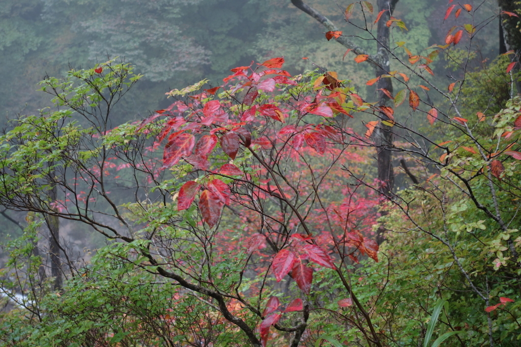 秋保大滝滝見台から見た秋