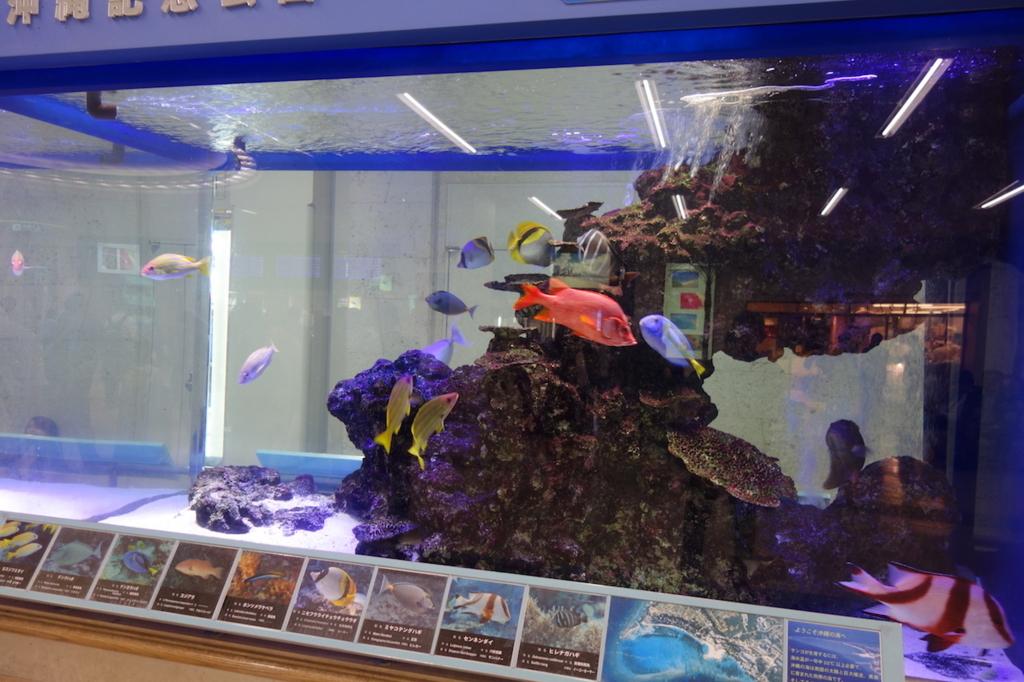 那覇空港1階にある熱帯魚水槽(平成30年3月1日)