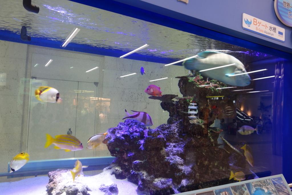那覇空港1階に設置される熱帯魚水槽(平成30年6月11日)