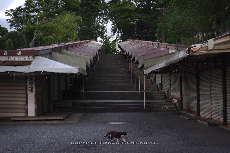 f:id:anachro-fukurou:20210729232238j:plain