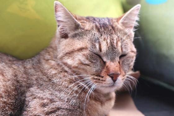 猫島の猫ちゃん