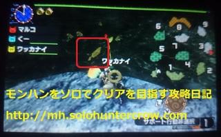 黄金魚 (3).JPG