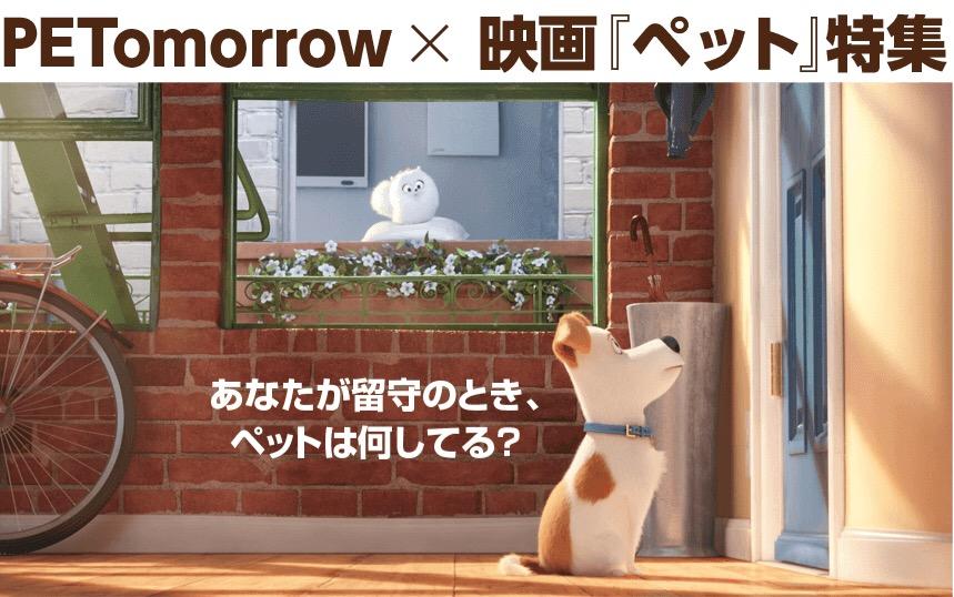 f:id:ancoro_chan:20160817005849j:plain