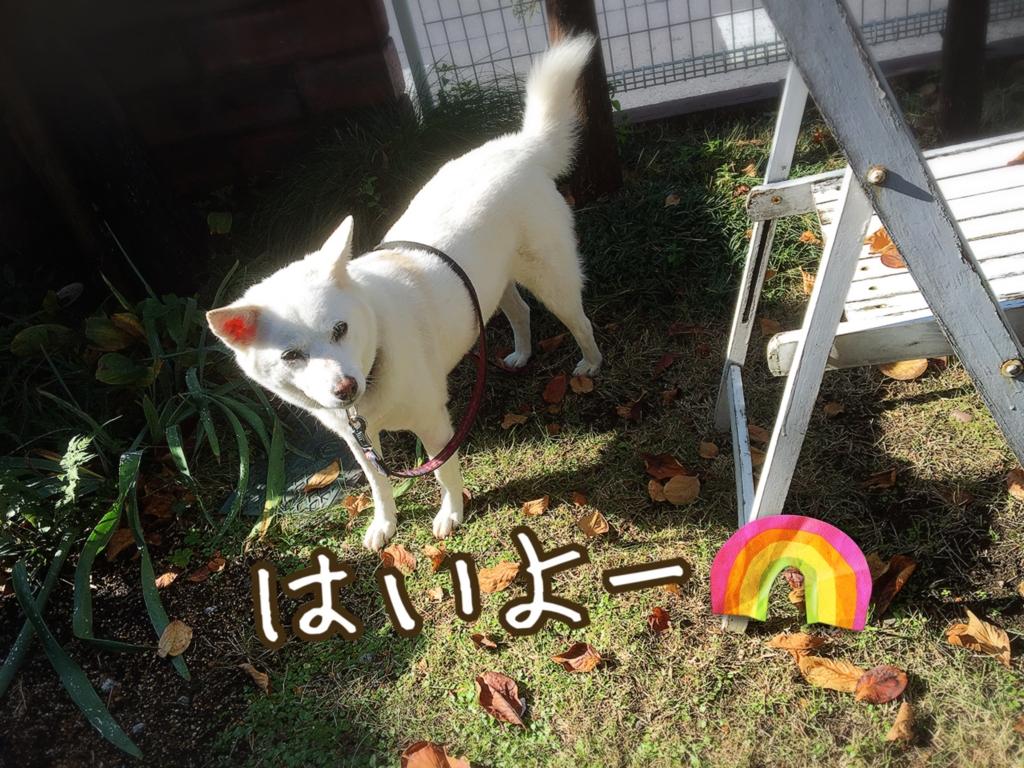 f:id:ancoro_chan:20161126203837j:plain