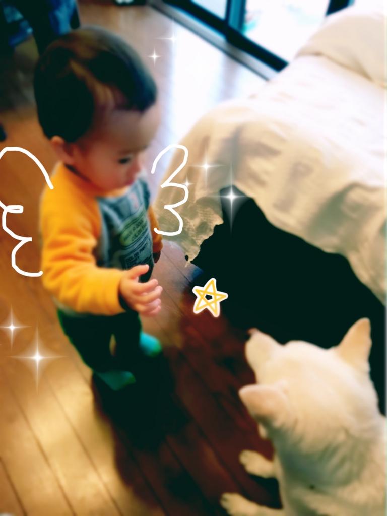 f:id:ancoro_chan:20170317171459j:plain