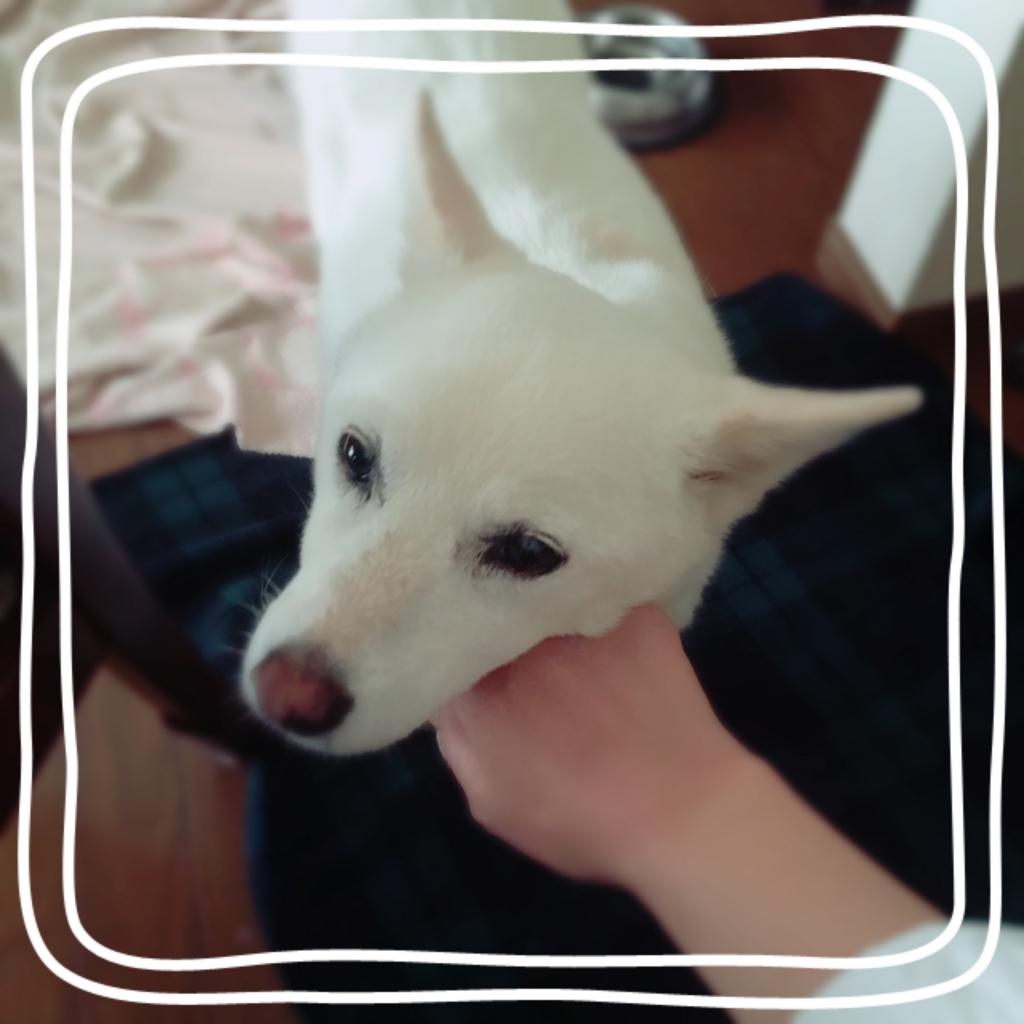 f:id:ancoro_chan:20170417072006j:plain