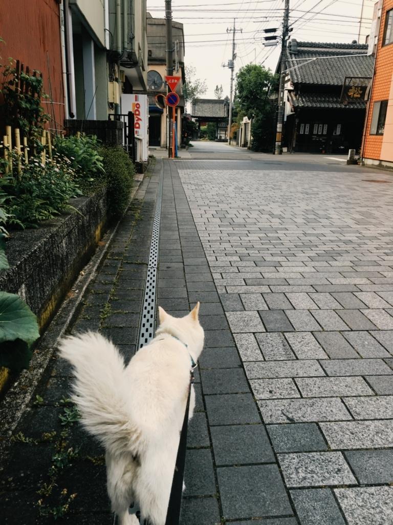 f:id:ancoro_chan:20170603115353j:plain