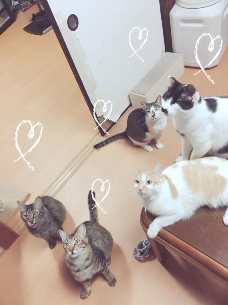 f:id:ancoro_chan:20170809104126j:plain