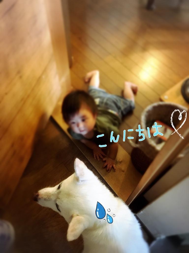 f:id:ancoro_chan:20170816134157j:plain
